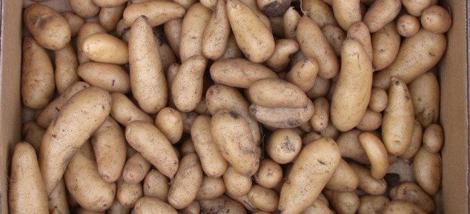 Humble &#8216;super&#8217; potato could hold the cure for iron deficiency anaemia