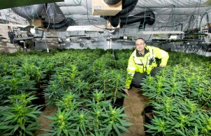 Marijuana plantation - photo courtesy of West Midlands Police